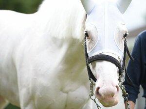 """「僕と彼女とは運命的な出会いでした」""""純白のアイドル馬""""ソダシの主戦騎手が告白する《白毛GI馬のもう一つの才能》"""