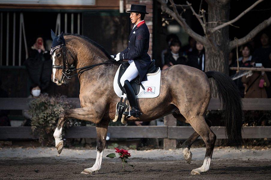 日本馬術で知られざる世界的快挙。五輪に出られなくとも伝説の人馬。<Number Web> photograph by Ryosuke Kaji
