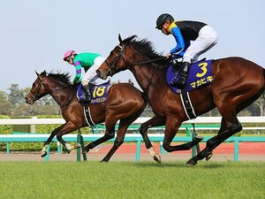 今年の日本ダービーは「名作」必至。東京の直線は、マカヒキのために。