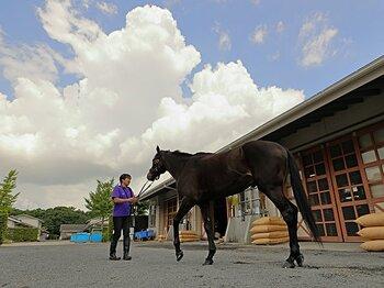 宝塚記念に登場する「最強の1勝馬」。2着7回のエタリオウが今度こそ?<Number Web> photograph by Yuji Takahashi