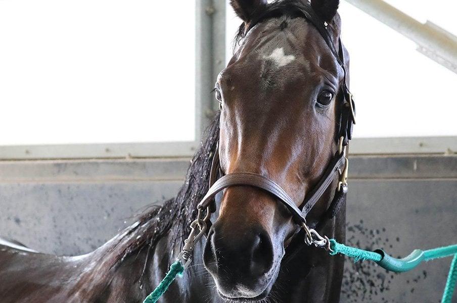 無敗の皐月賞馬=名馬という歴史。サートゥルナーリアは本当に1強か。<Number Web> photograph by Yuji Takahashi