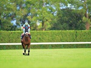 JCのアーモンドアイに死角はあるか。過去から浮かぶ優勝馬の条件は……。