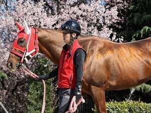 ルメールも観客もいない高松宮記念。モズアスコットにかかる厩舎の偉業。