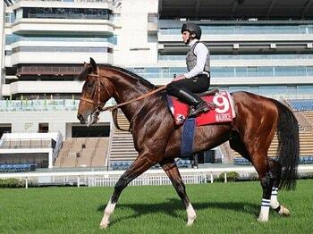 史上初、5つのGIの馬券が買える日。香港ではムーアが4冠の可能性も。<Number Web> photograph by Yuji Takahashi
