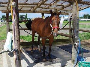 南相馬は、相馬野馬追だけじゃない。「馬女」に嬉しい温泉、厩舎、美食。