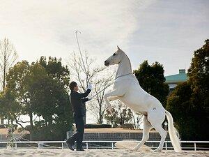"""競馬ファンも意外と知らない東京競馬場にいる""""二足歩行の白馬""""って? 25年目職員とのコンビはまるで親子"""