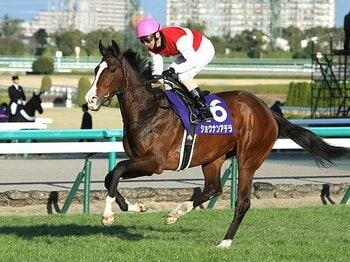 牡馬は大混戦、牝馬は一強か!?2015年のクラシックを占う。<Number Web> photograph by AFLO