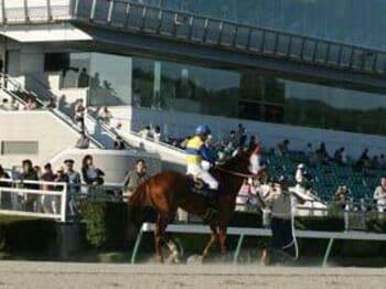 政治に翻弄される、「地方競馬の優等生」。<Number Web> photograph by Itaru Sato