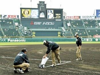 阪神園芸は猛虎の誇り。~スポーツを語ることは、案外技術がいるのだ~<Number Web> photograph by KYODO