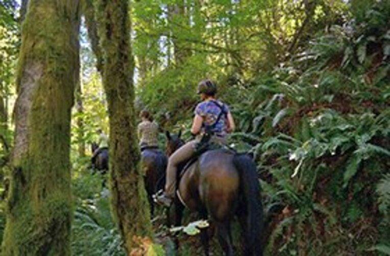 馬が来たら道を譲る、これがアメリカのトレイルでのルール。 / photograph by
