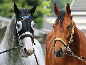 GI馬4頭出走の豪華GII札幌記念。凱旋門賞をにらむ2頭はどう走る?