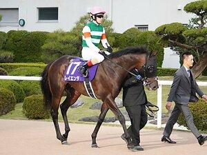 難解重賞函館記念は今年も多士済々。3頭出しの藤沢厩舎への対抗馬は?