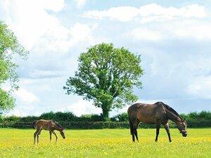 <最強牝馬は今>ウオッカ「夢のつづきは」