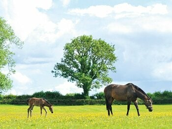 <最強牝馬は今>ウオッカ「夢のつづきは」<Number Web> photograph by Masumi Seki