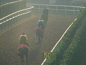秋競馬に波乱を呼ぶか?栗東・調教コースの大改修。