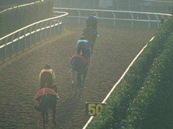 秋競馬に波乱を呼ぶか?栗東・調教コースの大改修。<Number Web> photograph by Keiji Ishikawa