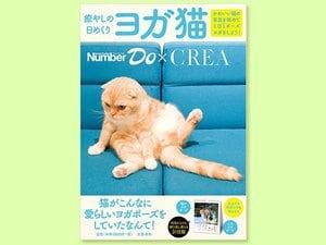 Number WebとCREA WEBで募集をした「ヨガをしている猫」の写真が日めくりカレンダーになりました!