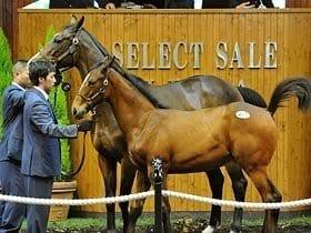 セレクトセール2009、注目すべきはあの馬主。~ドバイ・モハメド殿下の胸の内~