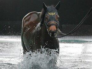 高松宮記念で父子制覇を狙う2頭。GI馬に初騎乗の藤田菜七子も注目。