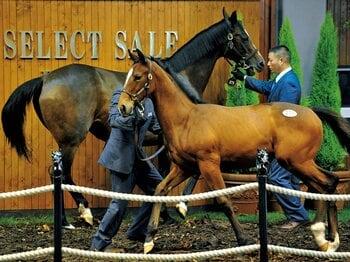 日本競馬を支える特徴的な2つのセリ市。~セレブ、お値打ちの共存共栄~<Number Web> photograph by KYODO