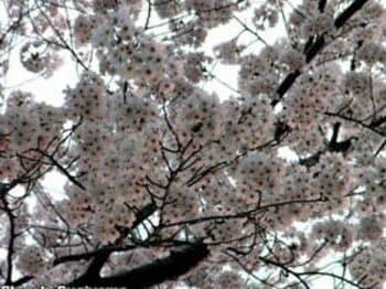 From:東京「あれ!?」<Number Web> photograph by Shigeki Sugiyama
