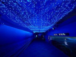 満天の星降る、新江ノ島水族館を巡るナイトワンダーストーリーズ 第二話
