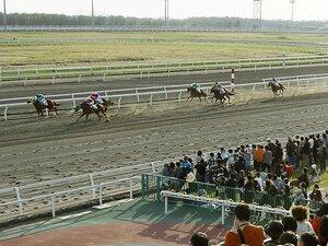800頭の被災馬と競馬を守る人たち。馬や騎手のためにも早期再開を祈る。