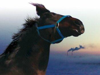 """""""被災馬""""というもうひとつの運命を私たちに突きつける映画『祭の馬』。<Number Web> photograph by 3JoMa Film/Documentary Japan/TOFOO"""