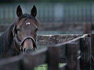 セレクトセール落札総額187億超!ディープ亡き今、超高額馬の出現は?