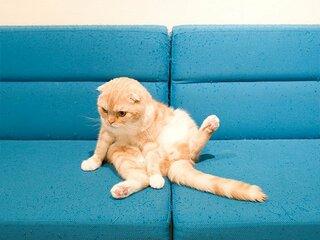 """<「今週の5枚」更新> 猫の""""ストレッチ""""写真を大募集! あなたの愛猫の写真がカレンダーに!?"""
