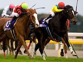 ドバイW杯と有馬記念。名牝に課せられた大舞台。~ウオッカの勇退とブエナの勇躍~