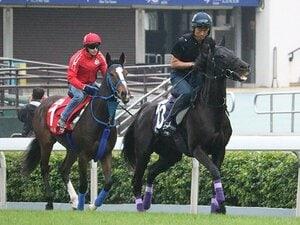 香港カップの総賞金は約4億円!ディアドラら日本馬もチャンス。