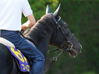 名牝の子孫たちが集結した安田記念。種牡馬を宿命づけられた馬が勝つ?<Number Web> photograph by Yuji Takahashi