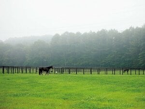 北海道地震が馬産地直撃するも、種牡馬たちは全馬無事の理由。~一晩で70km歩く、夜間放牧の意外な利点~