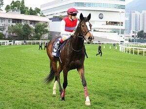 日本馬の海外GI、今年は勝利できず。香港国際の3つの2着に感じた無念。