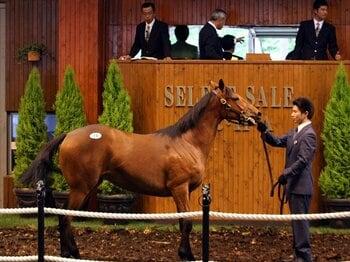 セレクトセールに見る、日本のセリの世界標準化。~成熟する競走馬市場~<Number Web> photograph by NIKKAN SPORTS