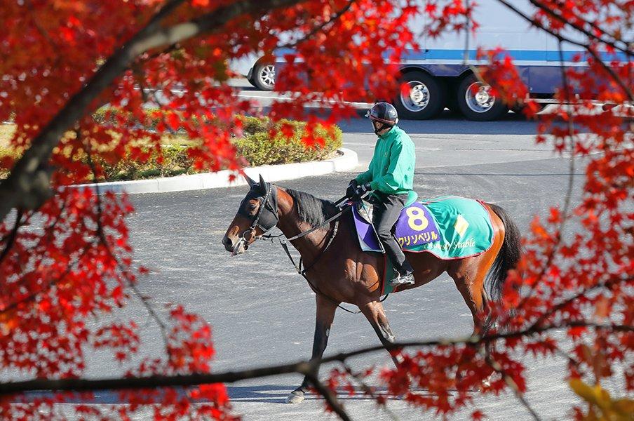 超豪華メンバーのダート王決定戦。3歳の「アロンダイトの甥」が強い。<Number Web> photograph by Yuji Takahashi