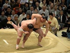 手負いの稀勢の里と戦った2人の関取。鶴竜と照ノ富士は何を感じていたか。